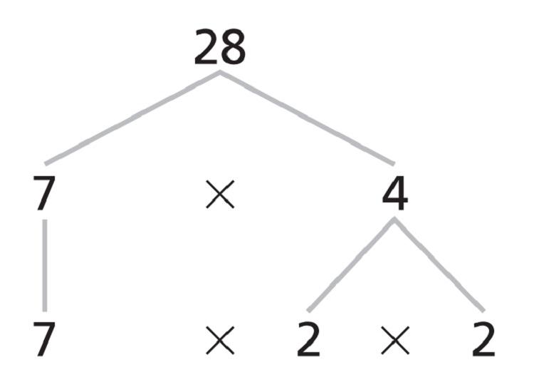 Prime Factorization Example